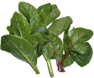 basella malabar spinach nutrition facts  health benefits