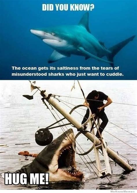 Funny Shark Memes - 20 funniest shark week memes gifs and comics weknowmemes