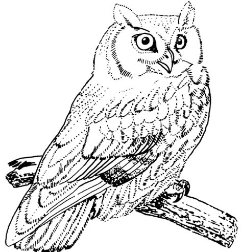 horned owl coloring page great horned owl coloring pages kleurplaat pinterest