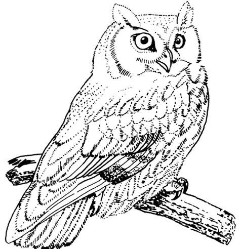 great horned owl coloring pages kleurplaat pinterest