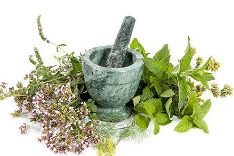 ramuan   tanaman obat herbal penyakit gondok  ampuh