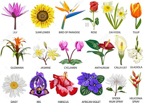 kinds of flowers with pictures and names