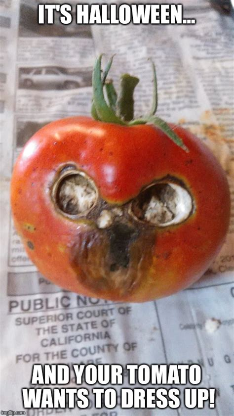 Tomato Meme - image tagged in halloween tomato imgflip