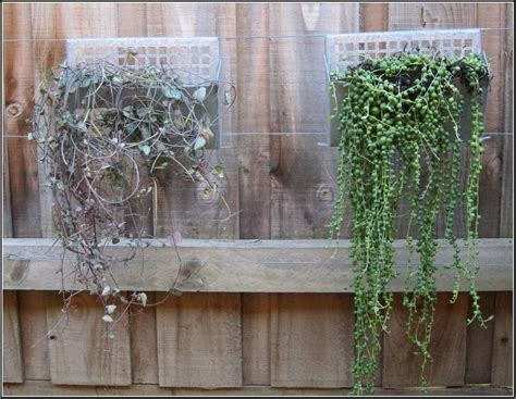 Garden Wall Hangings Wall Designs Garden Wall Small Plants For Amazing