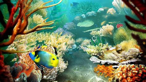 3d live fish wallpaper for pc tropical fish 3d screensaver live wallpaper hd youtube