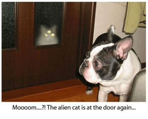 Cat Alien Meme - moooom the alien cat is at the door again cats meme on
