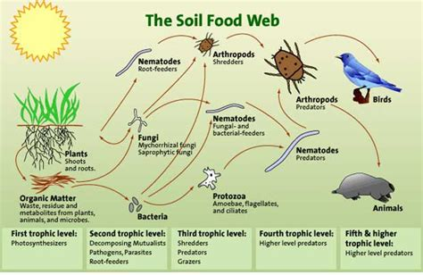 soil food web diagram lawn care guru circuit diagram maker