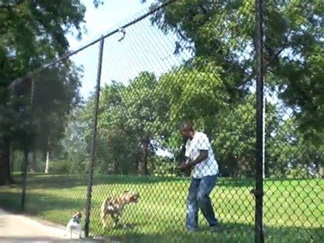 12 Foot Trellis Pitbull Scales 12 Foot Fence