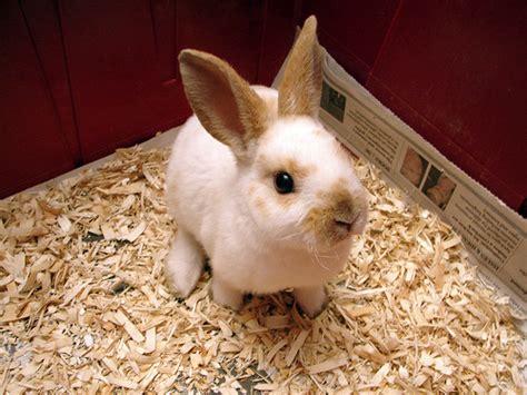 Baby Bunnies In Backyard Rex Rabbit The Life Of Animals