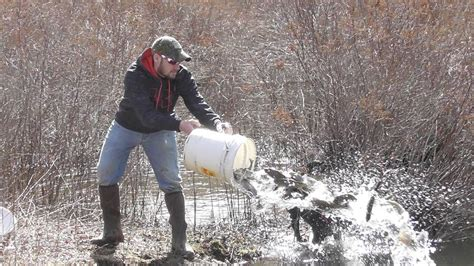 pa fish and boat commission trout stocked waters trout stocking in pa pretty transexual