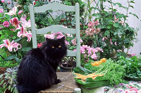 charming plants not toxic to cats images best idea home