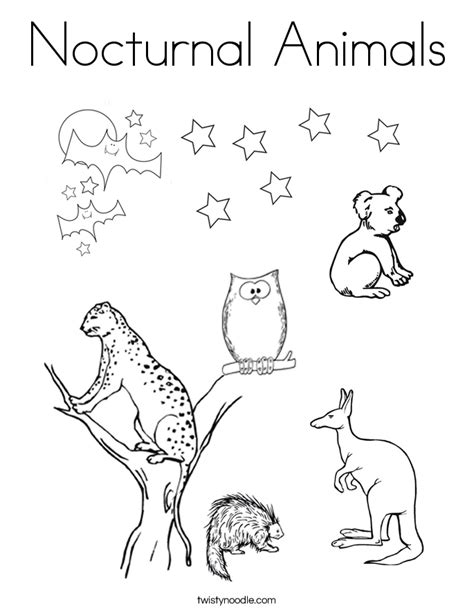 Nocturnal Animals Coloring Pages pictures of nocturnal animals coloring home