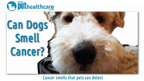 dogs smell cancer can dogs smell cancer pethealthcare co za