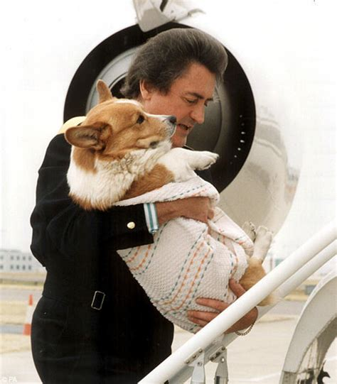the queen s corgi i recently got chubby a booster car seat and found