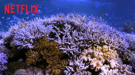Watch Chasing Coral 2017 Chasing Coral Trailer Ufficiale Hd Netflix Youtube