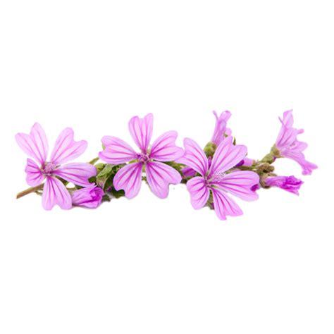 fiori di malva ricetta antipasto spiedini di caprino fiori di malva