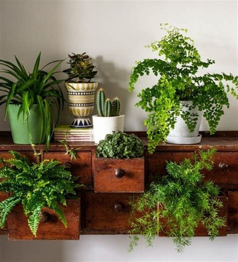 in door plants pot three four plants argements video 25 best ideas about house plants on pinterest plant