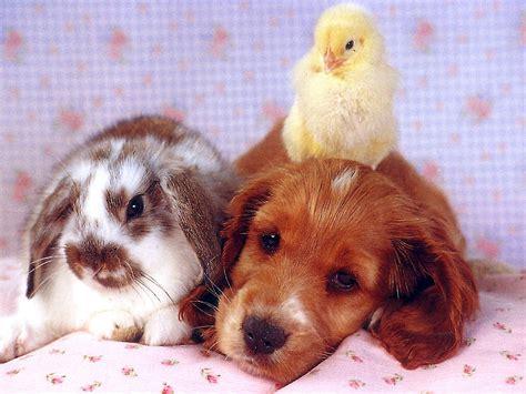 bunnies and puppies bunnies animals puppies baby animals rabbits baby