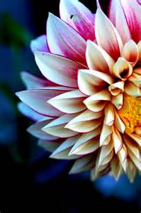 flower photography flower by flavie eidel fine art photography paper panel photograph floral rococo