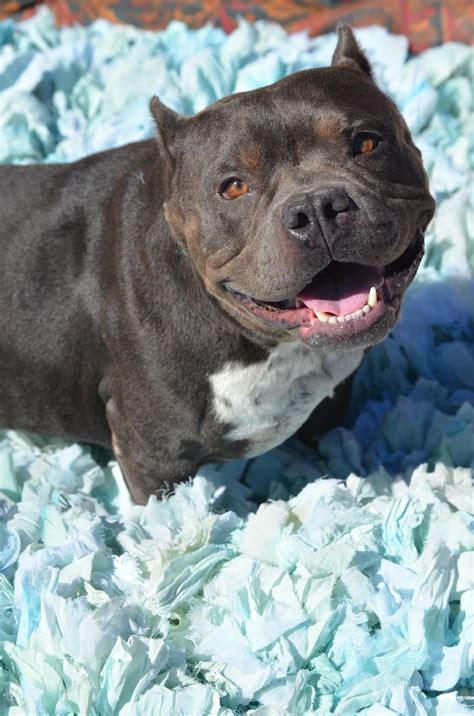 rescue organizations american rescue dog show hallmark channel