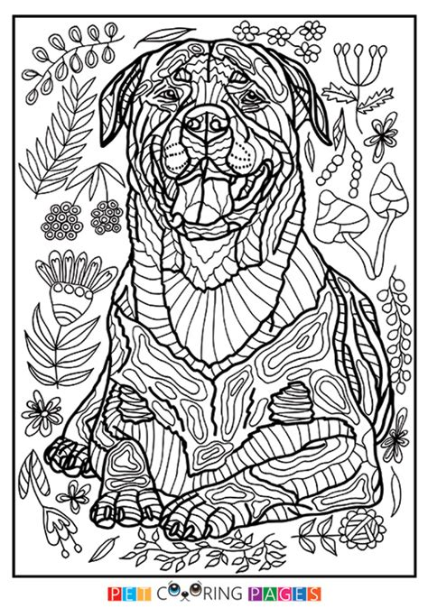 rottweiler puppies coloring pages rottweiler coloring page quot hera quot zileart