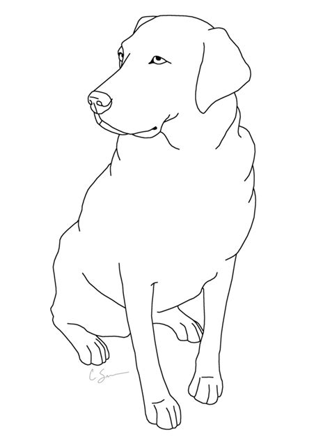 labrador in pencil coloring pages