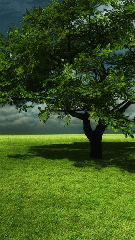 tree mobile wallpaper gallery