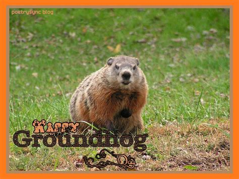 groundhog day groundhog wallpaper wallpapersafari