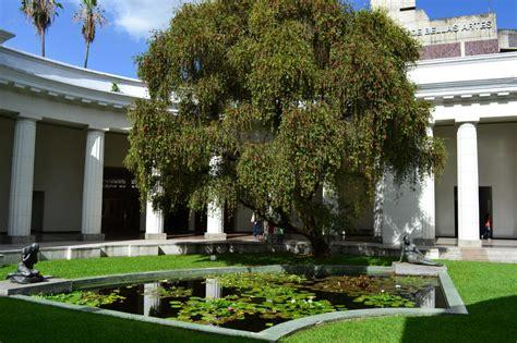 imagenes de jardines en venezuela fotos de barrio en jard 237 n del museo de ciencias caracas