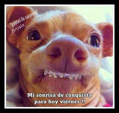 imagenes de feliz viernes hermosas imagenes de animales graciosos con frases lindas de feliz