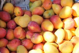 mangos yay or nay