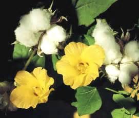 Bulk Culinary Herbs » home remedies news