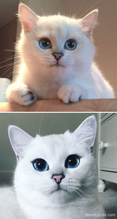 and cat 10 before and after photos of cats growing up bored panda