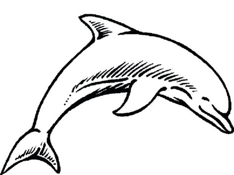dolphin pictures to color dolphin pictures to color dolphins coloring pages striped