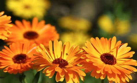 fiori  le piante  avere  giardino sempre fiorito