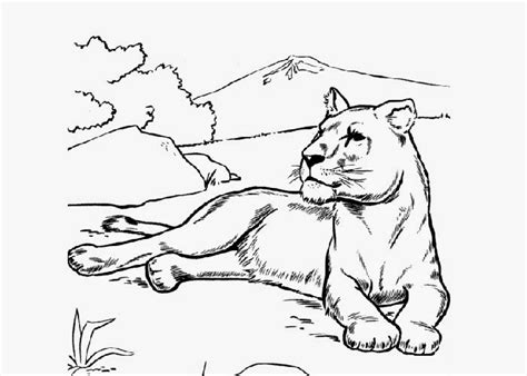 coloring pages lioness lioness coloring page free coloring pages and coloring