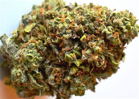 Marijuana Also Search For Raphael Marijuana Strain Medicalmarijuanablog