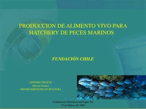 produccion de alimento vivo  hatchery de peces marinos fundacion chile powerpoint
