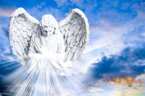 angel card readings horse wolf school  healing