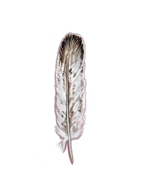 the gallery for gt eagle feather tattoo ideas collection of 25 native american feather eagle tattoos
