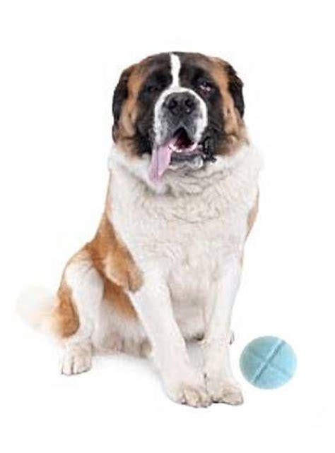 praziquantel for dogs praziquantel dogs ebay