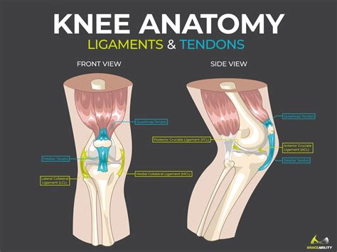 common knee injuries orthoinfo aaos