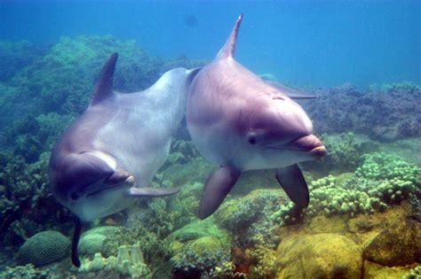 delfines amigos los delfines recuerdan a sus amigos durante toda la vida vacaciones en gredos