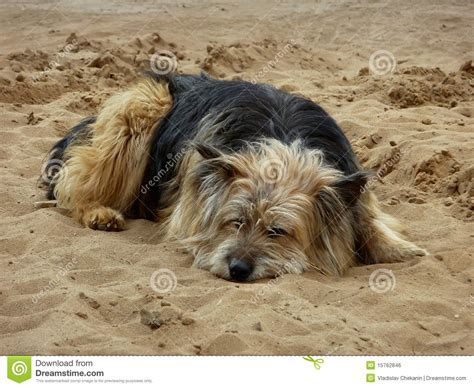 lonely puppy lonely royalty free stock image image 15762846