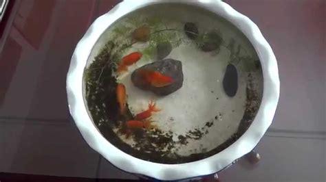 Ponds In Backyard My Indoor Mini Goldfish Pond Mah09585 13 10 2014 Youtube