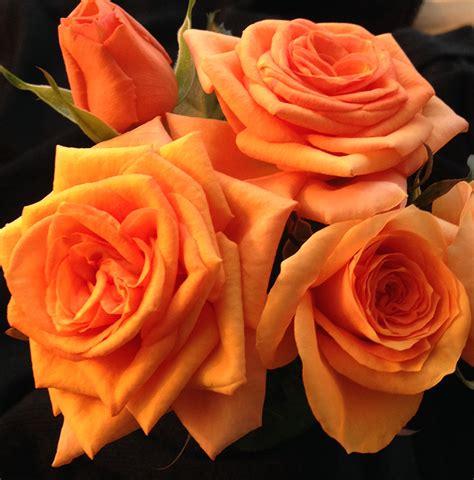 forever roses assortment roses forever