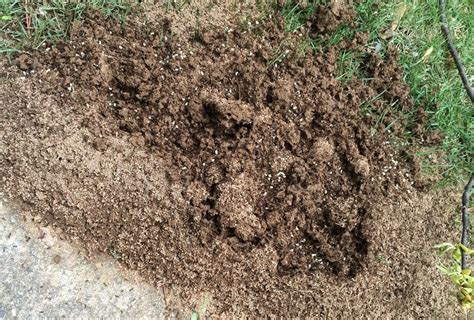 ants in bed ants in bed 28 images how to get rid of ant beds and