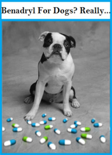 benadryl dosage for benadryl for dogs the pros and cons safety of it
