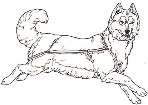 Husky Coloring Page Flickr Photo Sharing Siberian Husky Coloring Pages