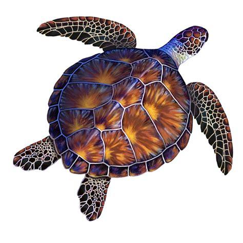 turtle colors porcelain brown turtle medium